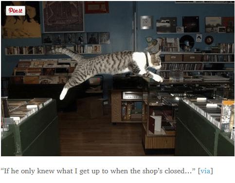 Record Shop cats